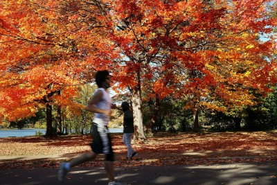 NEW YORK, NY - OCTOBER 30:  Autumn foliage fills the trees of Prospect Park on October 30, 2015 in the Brooklyn borough of New York City. Throughout the Northeast trees are nearing their peak foliage for the year. For the next few weeks nature enthusiasts and tourists will flock to parks and country roads to experience the colorful landscape.  (Photo by Spencer Platt/Getty Images)