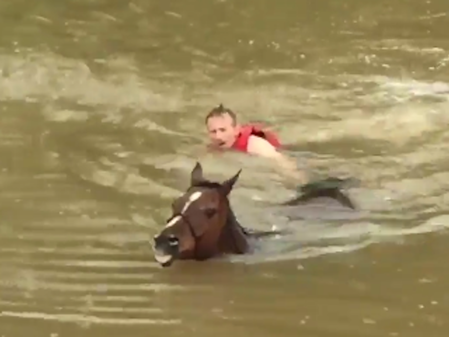 Dramatic Video Shows Horses Being Rescued From Floodwaters