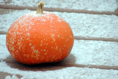pumpkin-with-frost